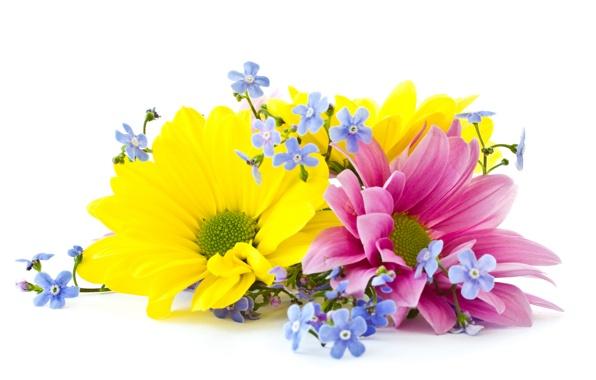 cvety-lepestki-flowers-2286